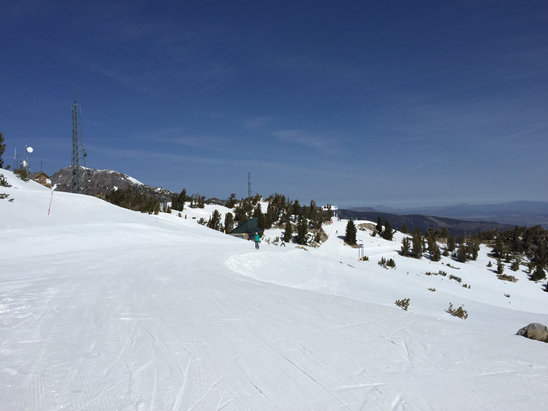 "Mt. Rose - Ski Tahoe - Skied Friday. Great bluebird day. Lots of snow on blue and green runs and one set of soft bumps on the back that softened. Lots of big stuff not open but still lots to ski. Would be great for kids. Snow would be great for the Midwest. No ice. Hard packed ""powder"" until it softens.  - © Bill's iPhone"