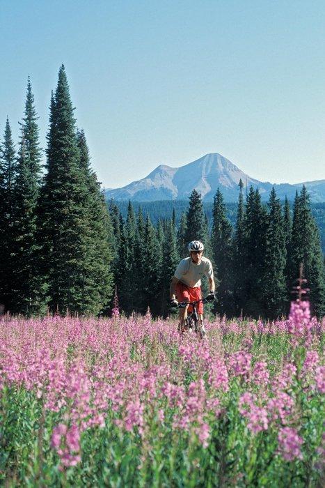 Biking through wildflowers in Durango, CO.