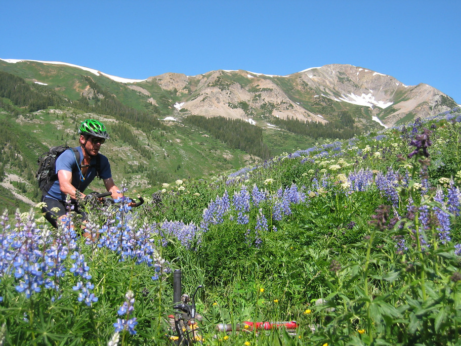Biker passing a field of lupins in the Gunnison-Crested Butte area. Photo from Gunnison-Crested Butte Tourism Association.