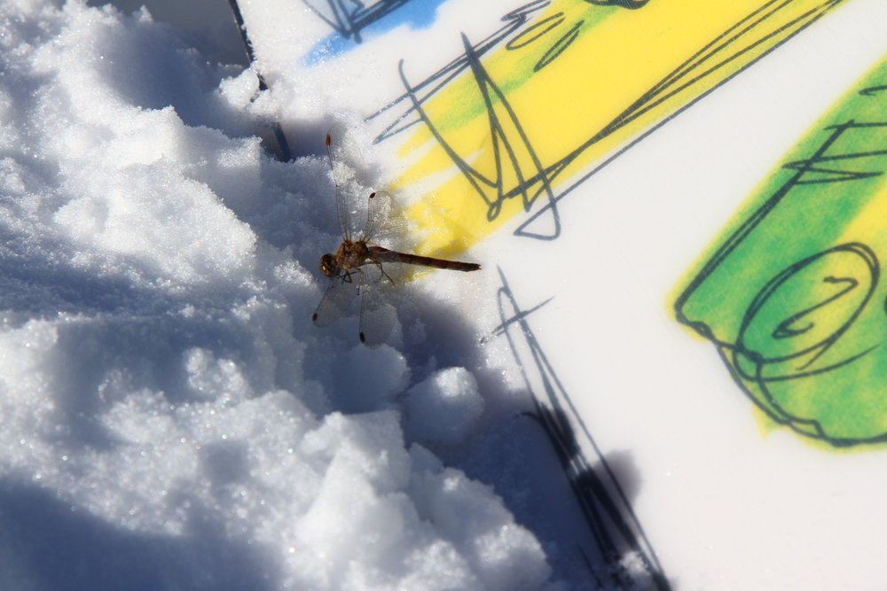 Überraschender Besuch auf 3000 Meter Höhe - © Skiinfo