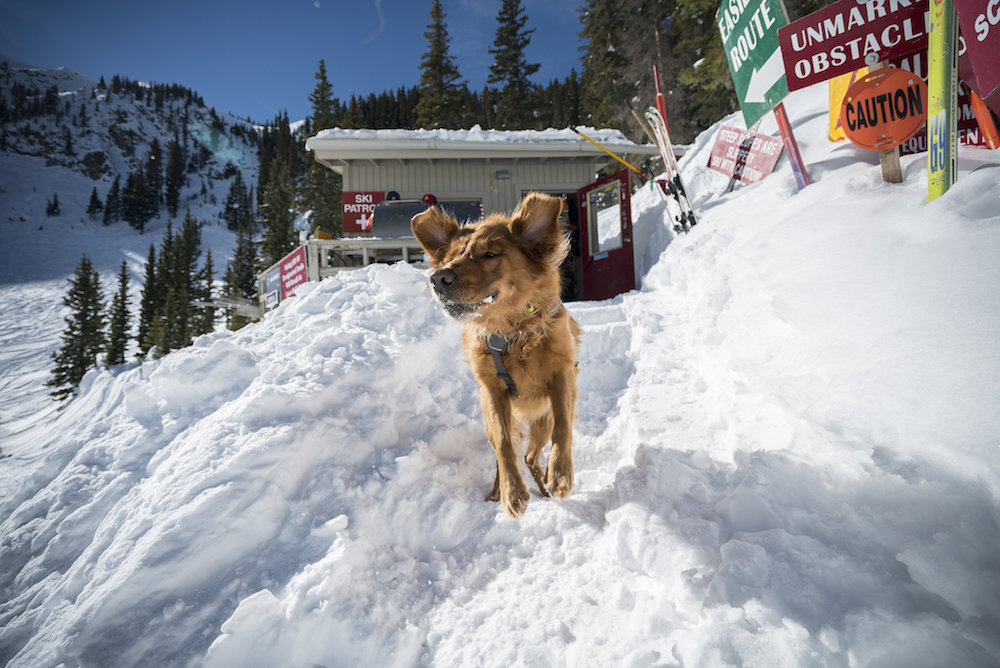 """Paw-don me, I hear dynamite in them hills!"" - © Taos Ski Valley"