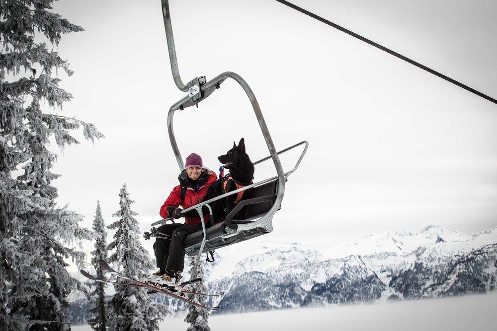 Psy także doceniają zalety wyciągów. - © Revelstoke Mountain