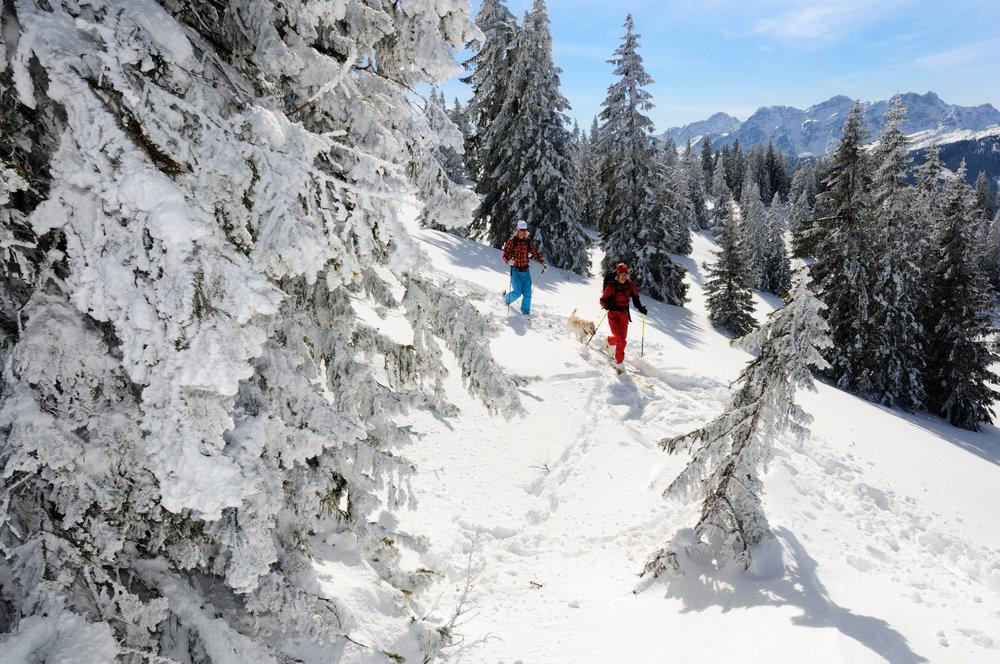 Abwechslungsreiches Gelände mit Wald - © Norbert Eisele-Hein