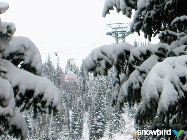 Una cabina vista attraverso le conifere innevate a Snowbird, Utah