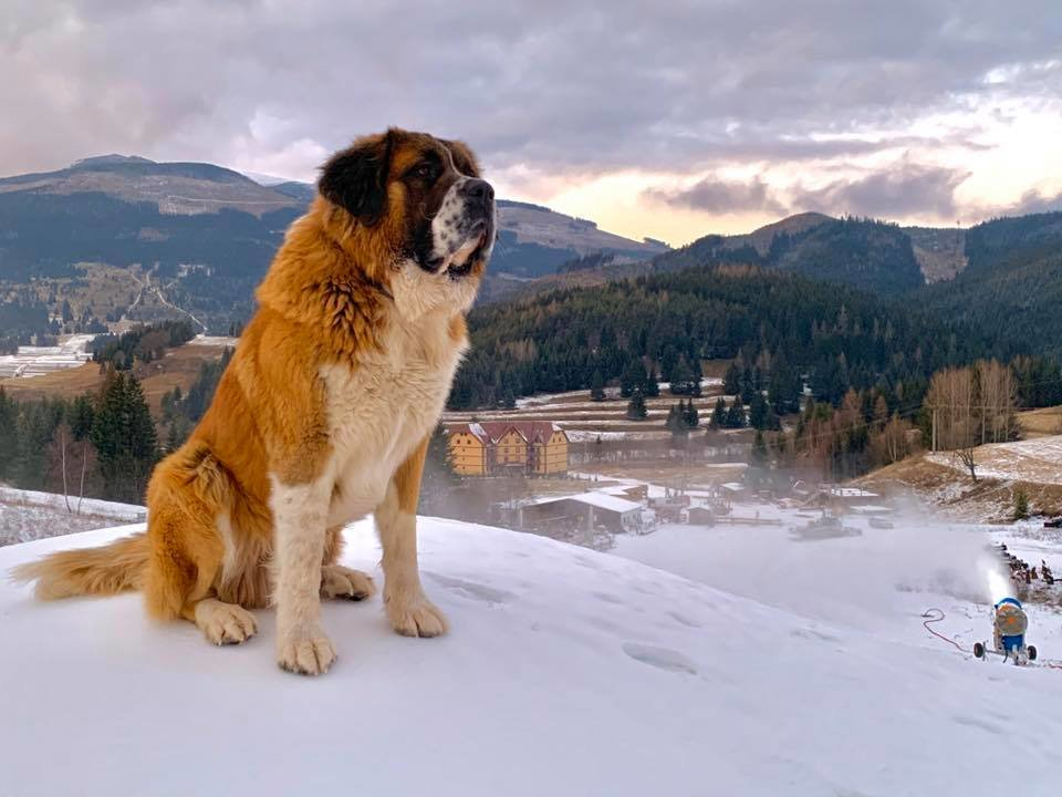 The Aron dog as a supervisor of artificial snow making procedure - © facebook | Ski Telgárt