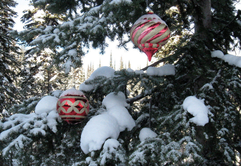Ornaments decorate trees at Sun Peaks. Photo by Becky Lomax. - © Becky Lomax