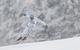 Christof Innerhofer gewann schon wieder auf der Kandahar - die Strecke liegt ihm zweifelsohne - © Alexis Boichard/AGENCE ZOOM