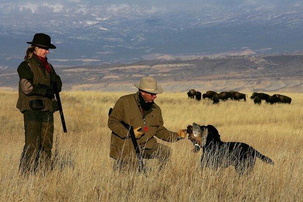 Upland bird hunting - ©St. Regis Aspen