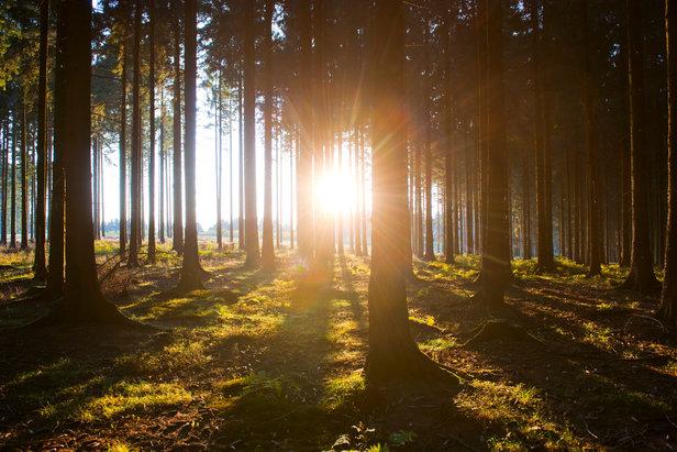 Waldroute im Sauerland