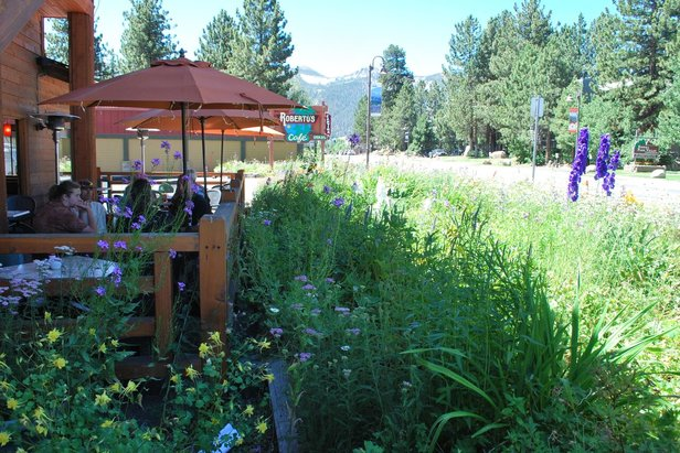 Wildflowers and Mexican cuisine at Roberto's Café.