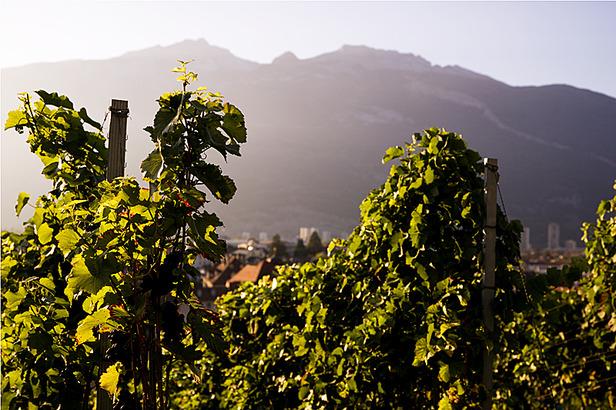 Traumjobs Graubünden: Endspurt für den Winzer-Job- ©Graubünden Ferien