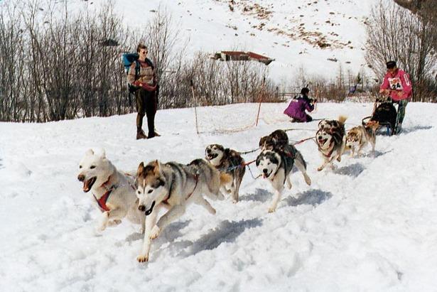 Snežné psy - 4. ročník festivalu pre rodiny s deťmi 23. a 24.2. v Tatranskej Lomnici
