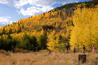 Top 10 Ski Resorts for Fall Colors - © Jeff Scroggins