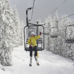 Monarch From Lift