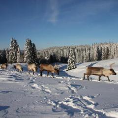 Des activités nordiques pour tous les goûts dans les Montagnes du Jura - ©CRT Franche Comté